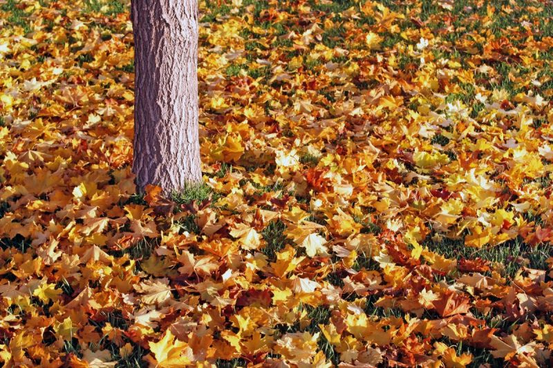 Fall Clean Ups & Maintenance