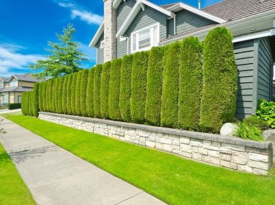 Hedge Maintenance