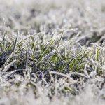 Winter-dew-on-lawn-grass