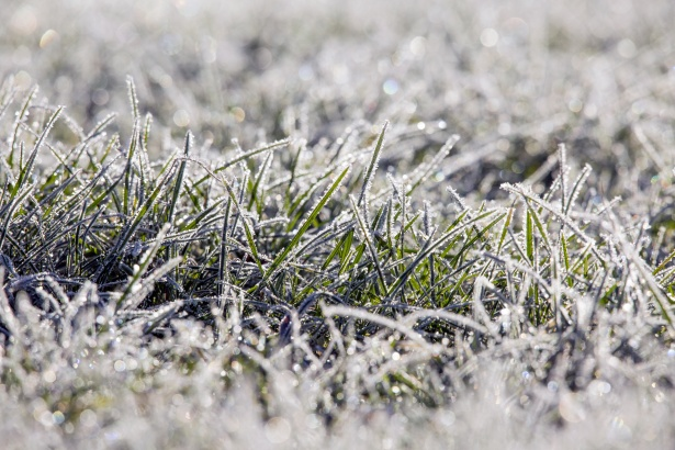 Winter-dew-on-lawn-grass