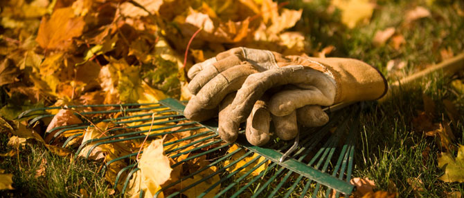 Your Autumn gardening task checklist
