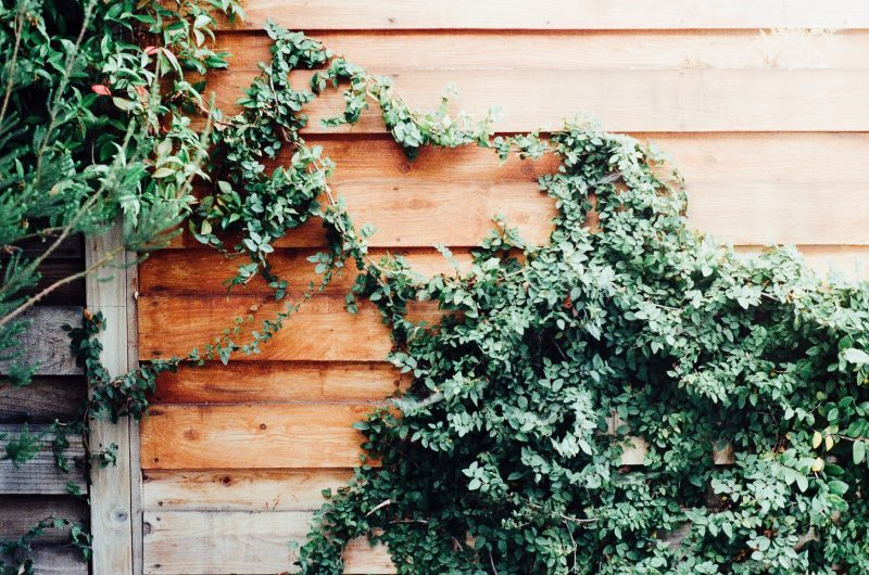 How to look after your garden while you're away