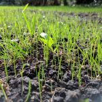 Top tips for growing lawn from seed