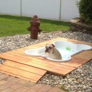 fun-outdoor-dog-pool-garden-ideas
