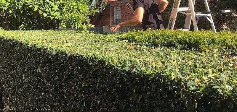 small hedge-cutting-techniques