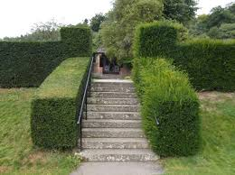 hedge-cutting-technique
