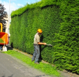 large hedge-cutting-techniques