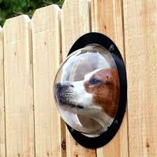 pet friendly backyard