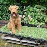 pet-friendly-garden-ideas