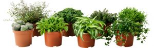 Tips on caring for potted plants