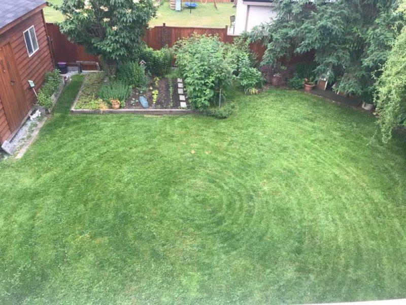 Jesse Rankin Coquitlam Lawn Mowing Snail Cut